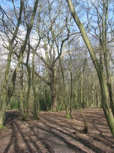 Coldfall Wood Coppice and Standard