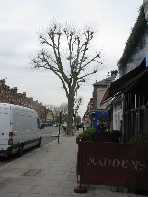 Pollarded Tree