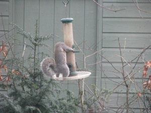 Fat Boy raids the birdfeeder
