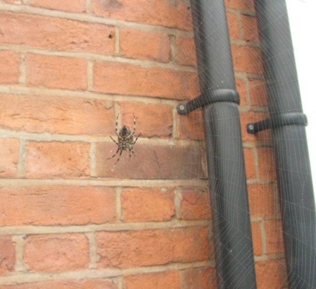 Spider Number Four with Drainpipe and Red Bricks. Should I be contacting Tate Modern, I wonder?