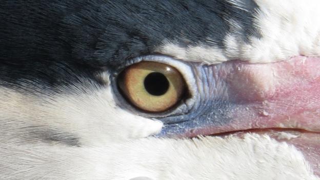 Heron Blog 22