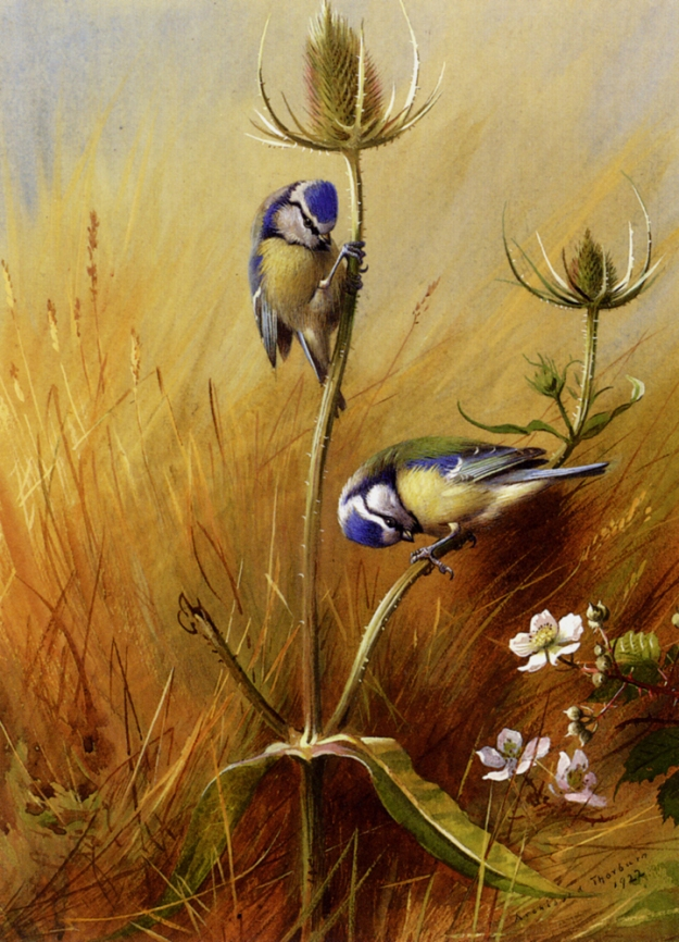 Blue Tits on Teasel by Archibald Thorburn