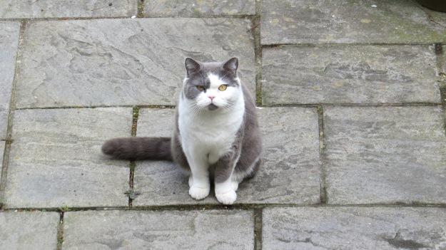 Evil cat-mint destroyer