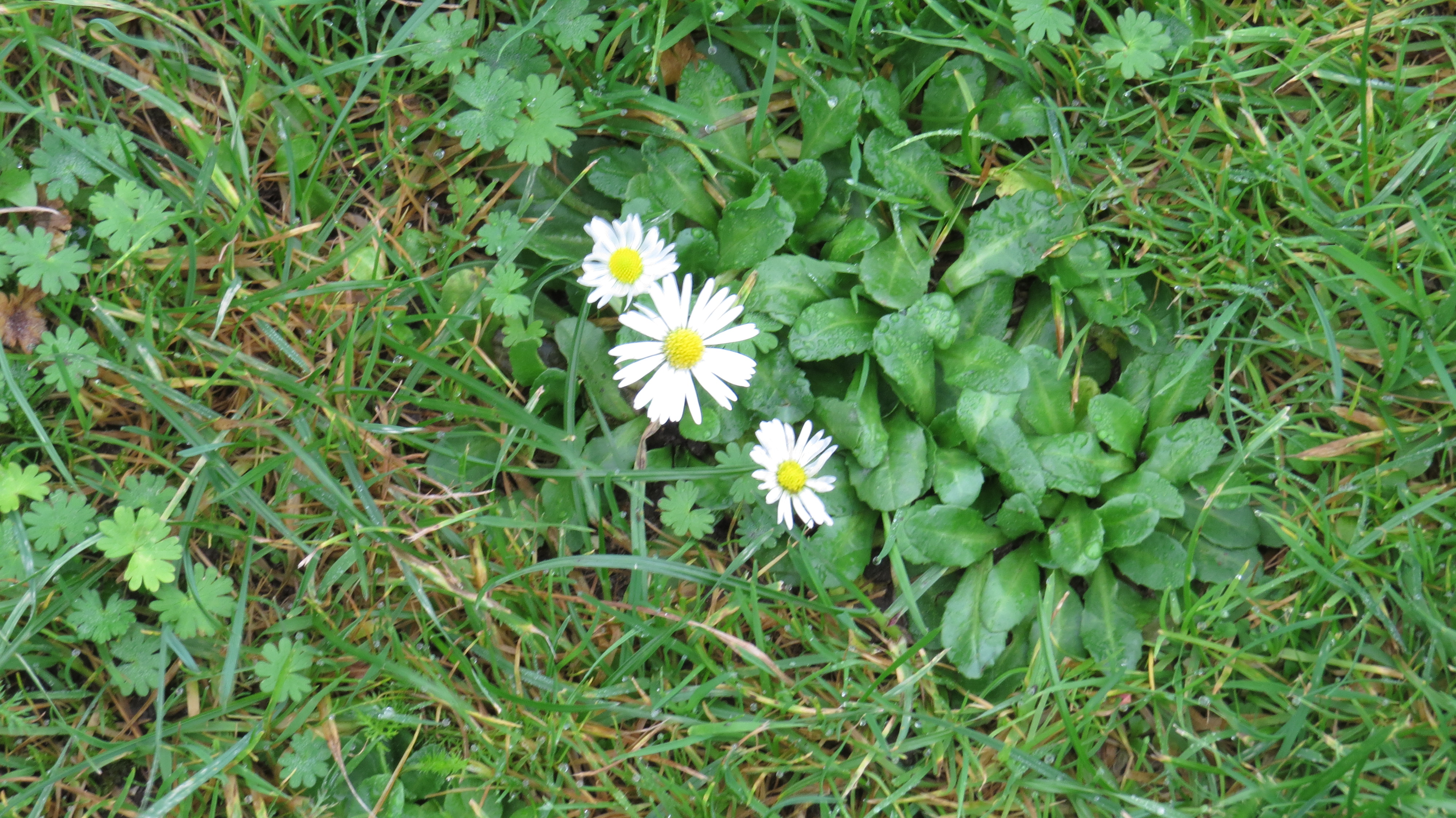 Wednesday Weed Daisy Bug Woman Adventures In London
