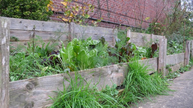 A vegetable bed in the N2 Community Garden