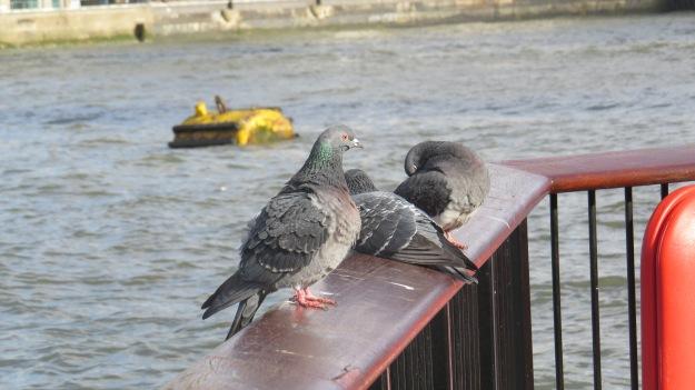 Thameside Pigeons