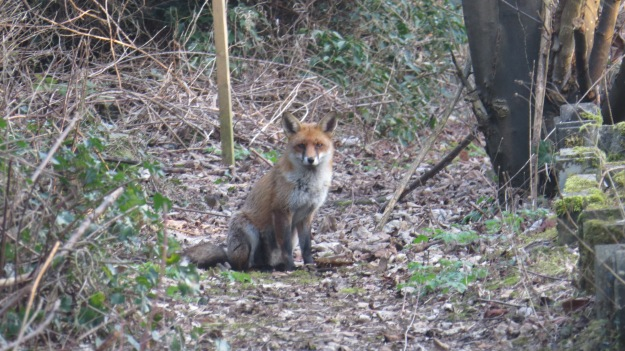 Tuesday's fox