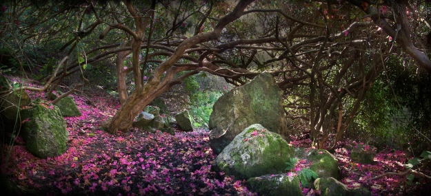 An arbour scattered with rhododendron petals in Howth (Photo Three - credit below)