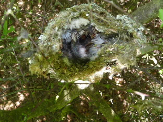 By nottsexminer (Long Tailed Tit Nest 02.05.11 Uploaded by Fæ) [CC BY-SA 2.0 (http://creativecommons.org/licenses/by-sa/2.0)], via Wikimedia Commons