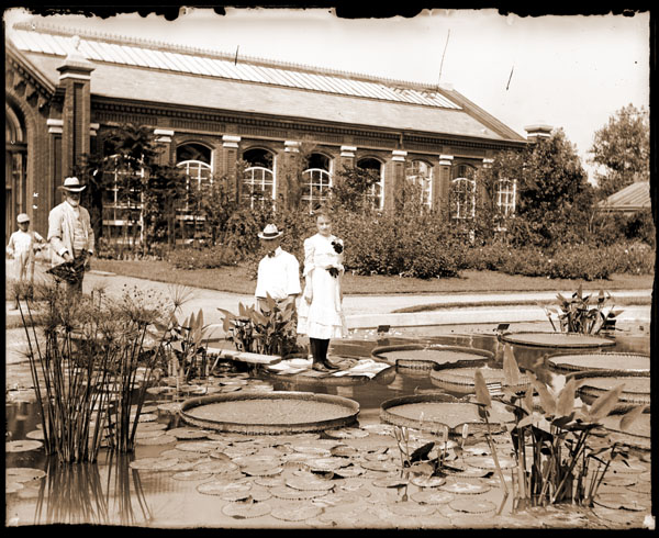 A woman standing on a Victoria Waterlily pad, courtesy of Missouri Botanical Gardens. There is a towel and a piece of wood on the pad to protect it.