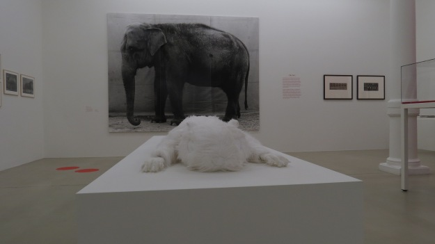 'David's Squirrel - Clark Expedition' (2012) by Mark Dion with 'The Elephant' (1996) by Balthazar Burkhard
