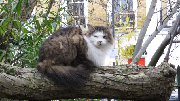 A very fine Islington cat