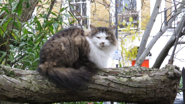 A very fine Islington cat