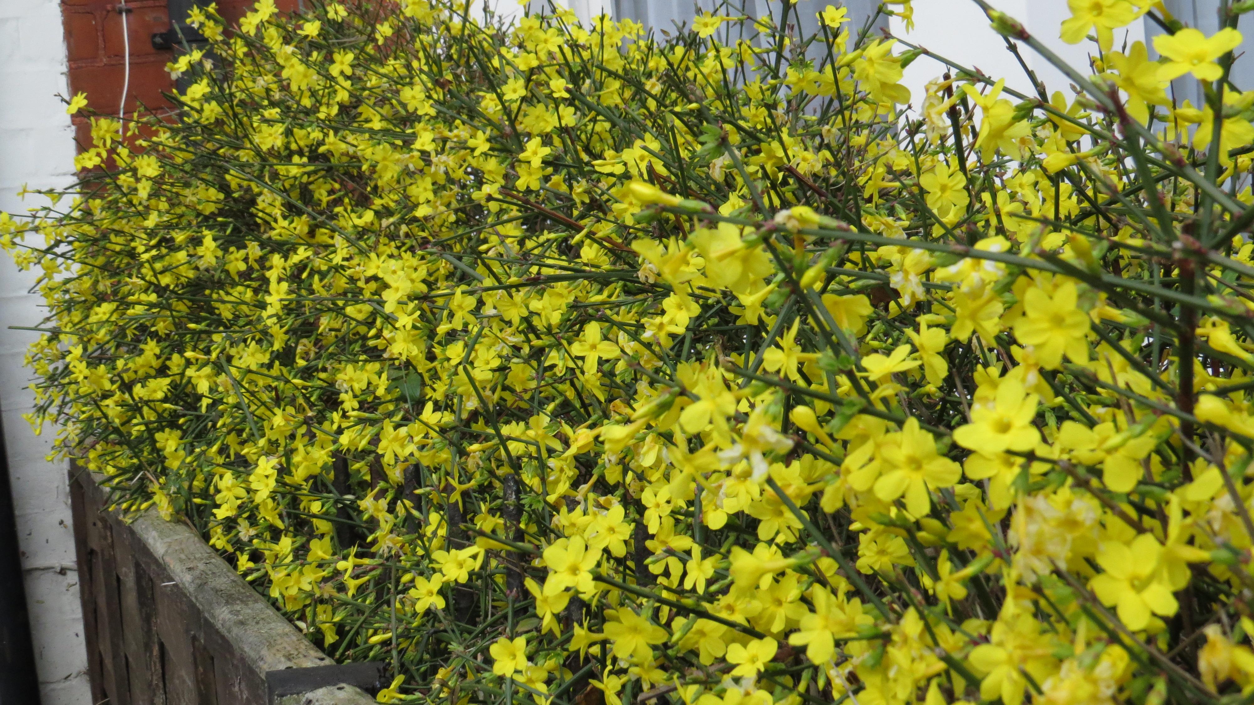 wednesday weed winter jasmine bug woman adventures. Black Bedroom Furniture Sets. Home Design Ideas
