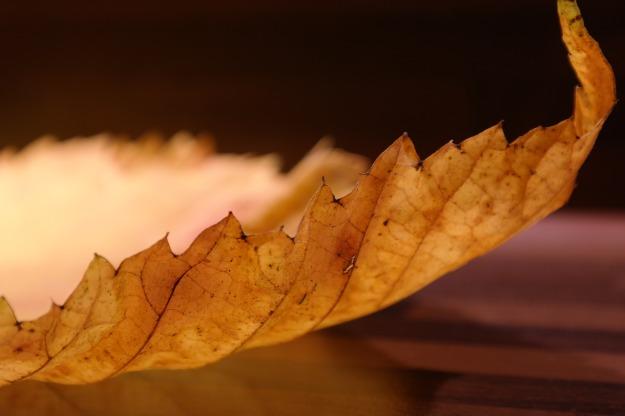 elm-leaf-231855