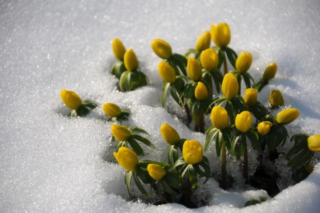 winter-linge-892279