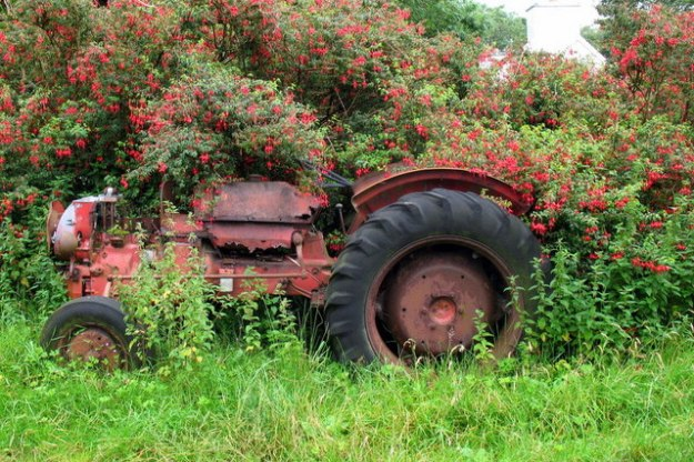 Photo Four (tractor and fuchsia) by Sharon Loxton [CC BY-SA 2.0 (https://creativecommons.org/licenses/by-sa/2.0)], via Wikimedia Commons