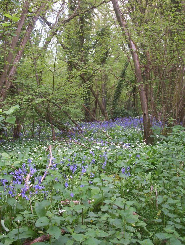 Photo Two (ancient woodland) by By No machine-readable author provided. Naturenet assumed (based on copyright claims). - No machine-readable source provided. Own work assumed (based on copyright claims)., CC BY-SA 3.0, https://commons.wikimedia.org/w/index.php?curid=134686