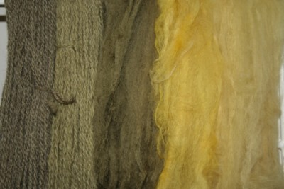 Photo Four from http://fibre2fabric.blogspot.com/2007/09/dyeing-with-goldenrod.html