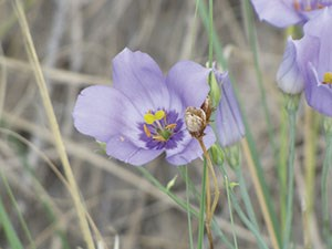 Photo Five from https://www.nps.gov/whsa/learn/nature/desert-in-bloom.htm