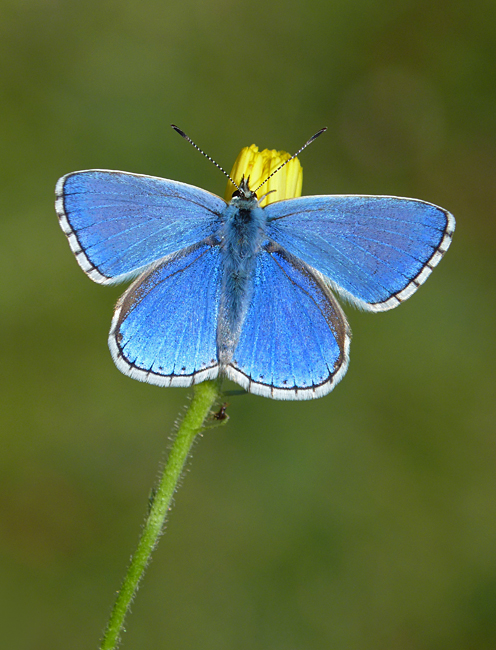 Photo Fourteen by Neil Hulme from https://www.ukbutterflies.co.uk/album_photo.php?id=16082