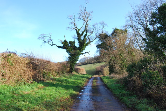 Photo Five by Paul Hutchinson/Ivy covered tree, Marldon Lane