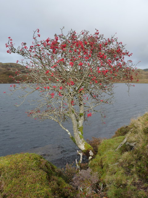 Photo Five by Brian Turner / Rowan Tree on Feinn Loch - Kilmelford